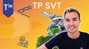 ECE SVT Terminale